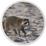 Raccoon On The Beach Round Beach Towel