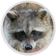 Raccoon's Gorgeous Face Round Beach Towel