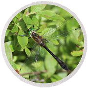 Racket-tailed Emerald  Round Beach Towel