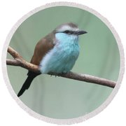 Racket-tailed Roller V2 Round Beach Towel