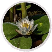 Round Beach Towel featuring the photograph  Radiant White Pond Lily  by Betty Pauwels
