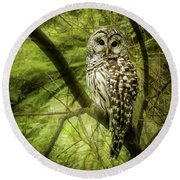 Radiating Barred Owl Round Beach Towel