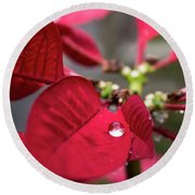Rain Drop On A Poinsettia  Round Beach Towel