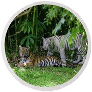 Rain Forest Tigers Round Beach Towel