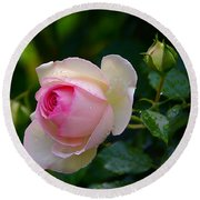 Round Beach Towel featuring the photograph Rain-kissed Rose by Byron Varvarigos