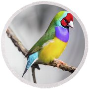 Rainbow Finch Round Beach Towel