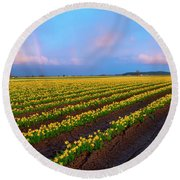 Round Beach Towel featuring the photograph Rainbows, Daffodils And Sunset by Mike Dawson