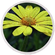 Round Beach Towel featuring the photograph Raindrops On Daisy by Judy Vincent