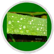 Raindrops On Leaf Round Beach Towel
