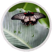 Round Beach Towel featuring the photograph Raining Wings by Karen Wiles