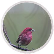 Round Beach Towel featuring the photograph Rainy Day Finch by Susan Capuano