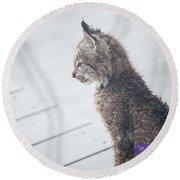Profile In Kitten Round Beach Towel