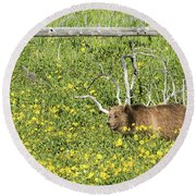 Raspberry, Sow Grizzly Round Beach Towel