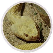 Rattlesnake Closeup Round Beach Towel