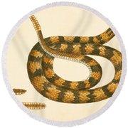 Rattlesnake Round Beach Towel by Mark Catesby