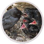 Raven Babies Breakfast Round Beach Towel