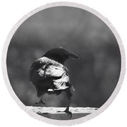 Round Beach Towel featuring the photograph Raven In The Sun by Susan Capuano