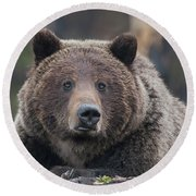Raw, Rugged And Wild- Grizzly Round Beach Towel