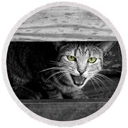 Rawr Round Beach Towel