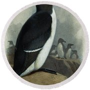 Razorbill Round Beach Towel by Archibald Thorburn