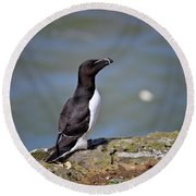 Razorbill Round Beach Towel by Vicki Field