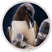 Razorbill With Chick, Farne Islands Round Beach Towel
