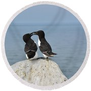 Razorbills In Love Round Beach Towel