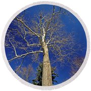 Round Beach Towel featuring the photograph Reaching For The Sky by Suzanne Stout