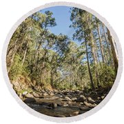Round Beach Towel featuring the photograph Reaching Skyward by Linda Lees