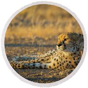 Reclining Cheetah Round Beach Towel by Inge Johnsson