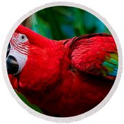Red And Green Macaw Round Beach Towel