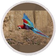Red-and-green Macaw Round Beach Towel