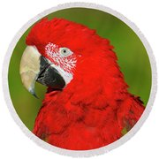 Round Beach Towel featuring the photograph Red And Green by Tony Beck