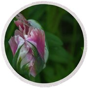 Round Beach Towel featuring the photograph Red And White Bud 1 by Timothy Latta