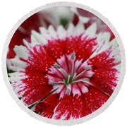 Red And White Flower Round Beach Towel by Tim Stanley
