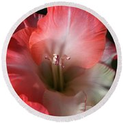 Red And White Gladiolus Flower Round Beach Towel by Joy Watson