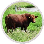 Round Beach Towel featuring the photograph Red Angus Bull by J L Zarek
