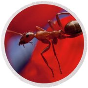 Round Beach Towel featuring the photograph Red Ant Macro by Jeff Folger