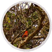 Red Apapane In Ohia Forest  Round Beach Towel