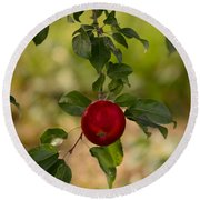 Red Apple Ready For Picking Round Beach Towel