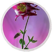 Red Aquilegia 2 Round Beach Towel by Shirley Mitchell