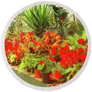 Red Begonias In The Glasshouse. Round Beach Towel
