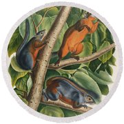 Red Bellied Squirrel  Round Beach Towel by John James Audubon