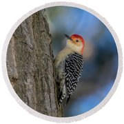 Red-bellied Wodpecker 3 Round Beach Towel