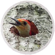 Red-bellied Woodpecker 02 Round Beach Towel by Al Powell Photography USA