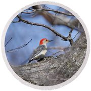 Red-bellied Woodpecker 1134 Round Beach Towel by Michael Peychich