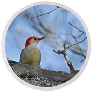 Red-bellied Woodpecker 1137 Round Beach Towel by Michael Peychich