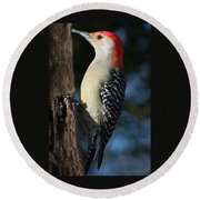Red-bellied Woodpecker 3 Round Beach Towel