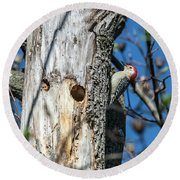 Red-bellied Woodpecker At His Home Round Beach Towel