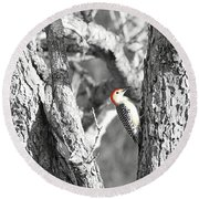 Round Beach Towel featuring the photograph Red-bellied Woodpecker by Benanne Stiens